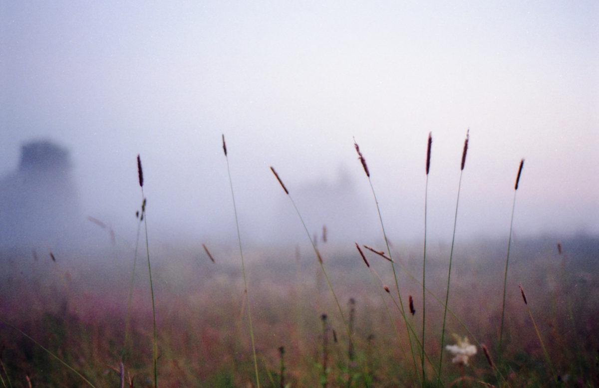 Колосья, туман - плёнка