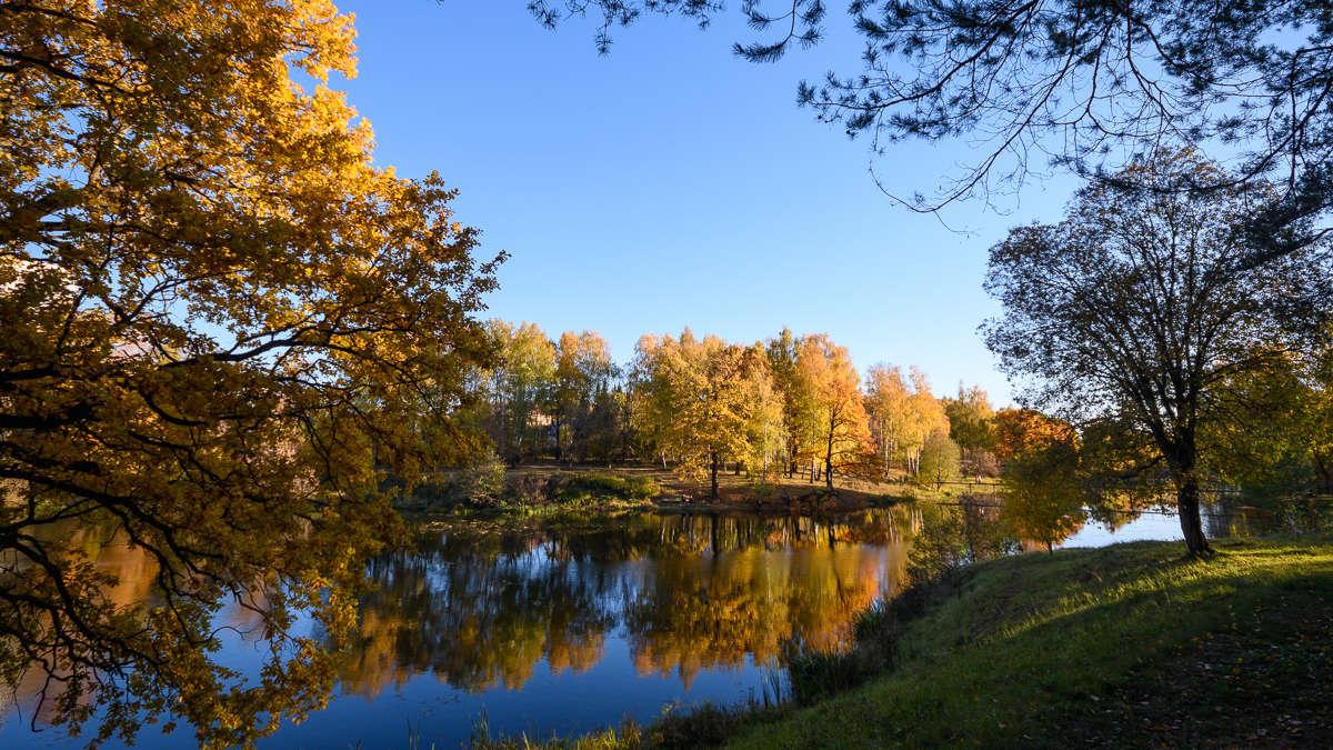 Золотая осень на Петрице