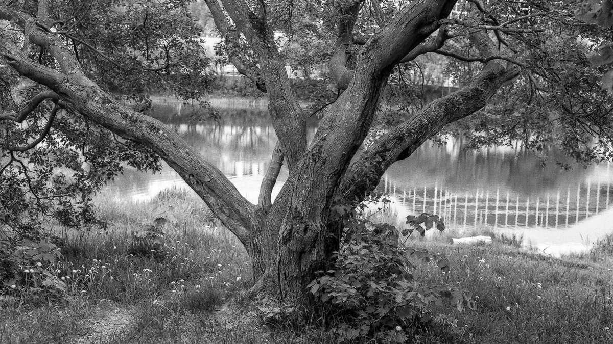 Черно-белое лето