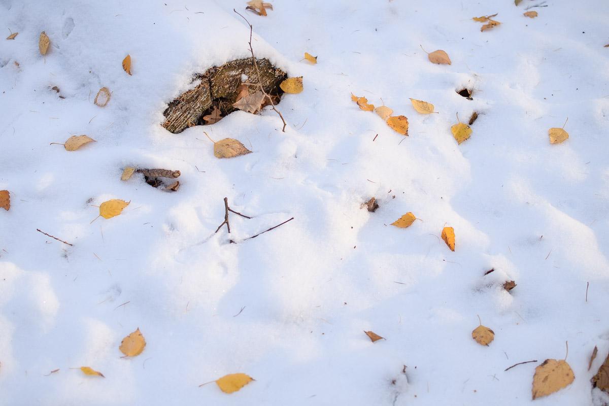 Листья на снегу