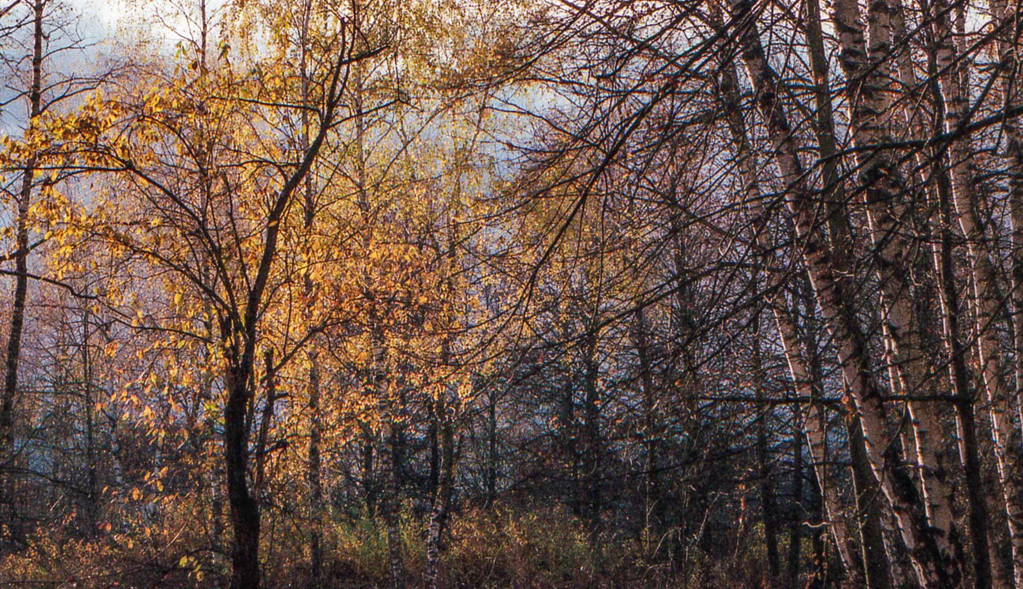 Яркие цвета - обложка записи