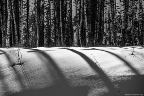 Birch Shadows Mono